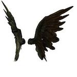 Wingstock 2017