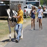 Winona County Fair 2020