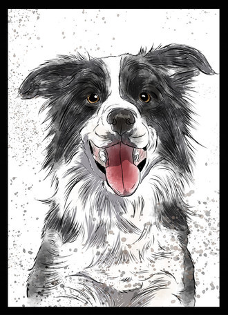 Quadro Border Collie