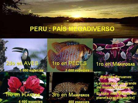 Reconoce A Peru Como Superpotencia De Biodiversidad Inforegion