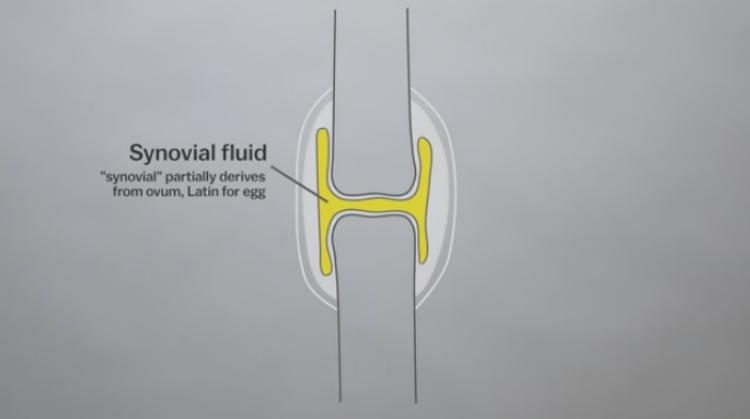 Fluid in between the joints.