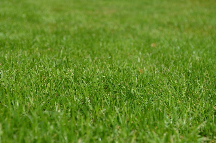 Image of green grass.