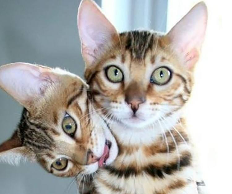 Two cats making illusion.