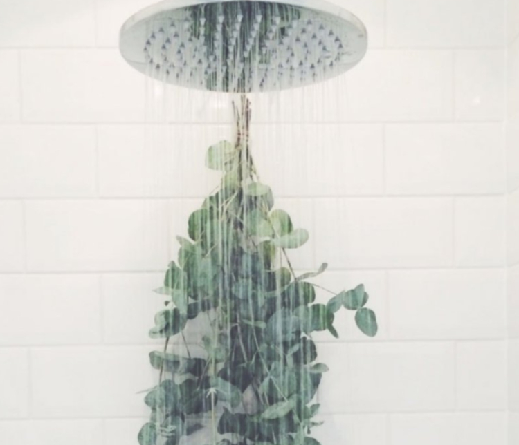Image of eucalyptus in the shower
