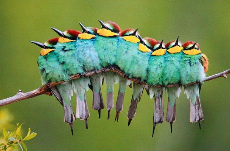 illusion birds