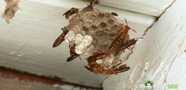 wasp-nest-750x364