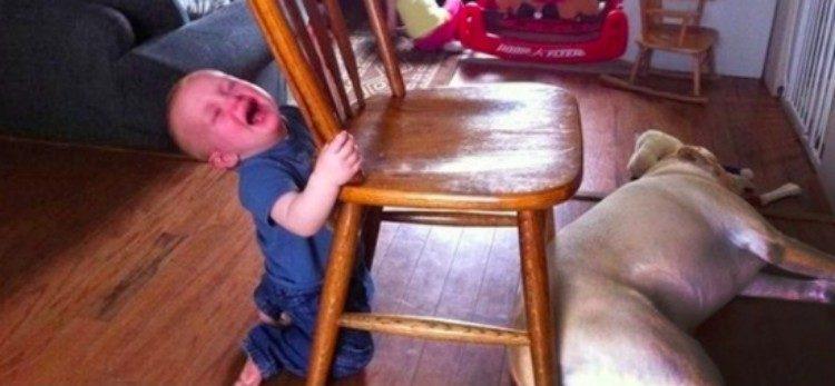 upset kids dog