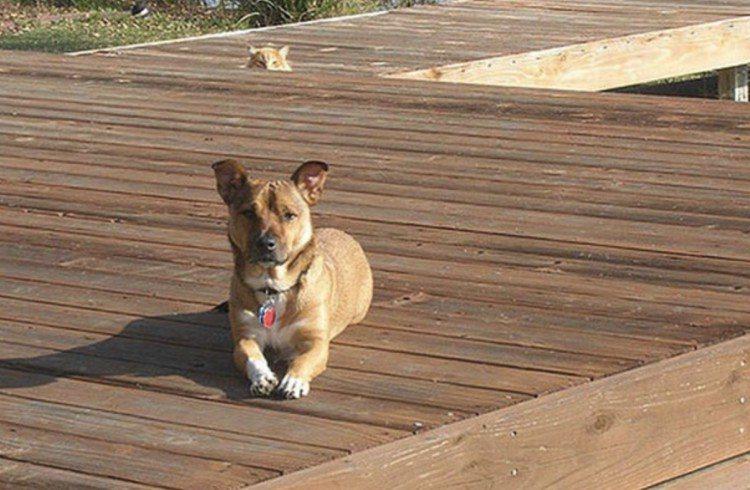 Cat photobombing dog on pier.