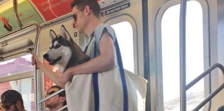 dog subway 2