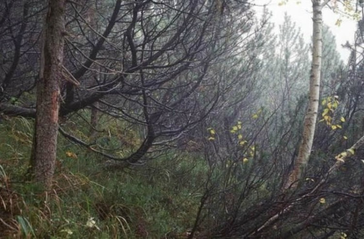 Man camouflaged in photo of forest