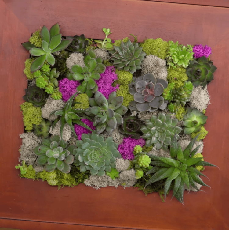 Succulent Wall Garden finished