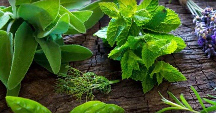 slow cooker herbs