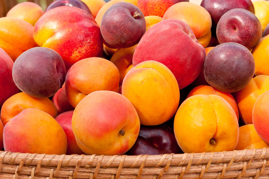 Image of ile of colorful summer fruits - apricots, nectarines, peaches, plums and red velvet apricots.