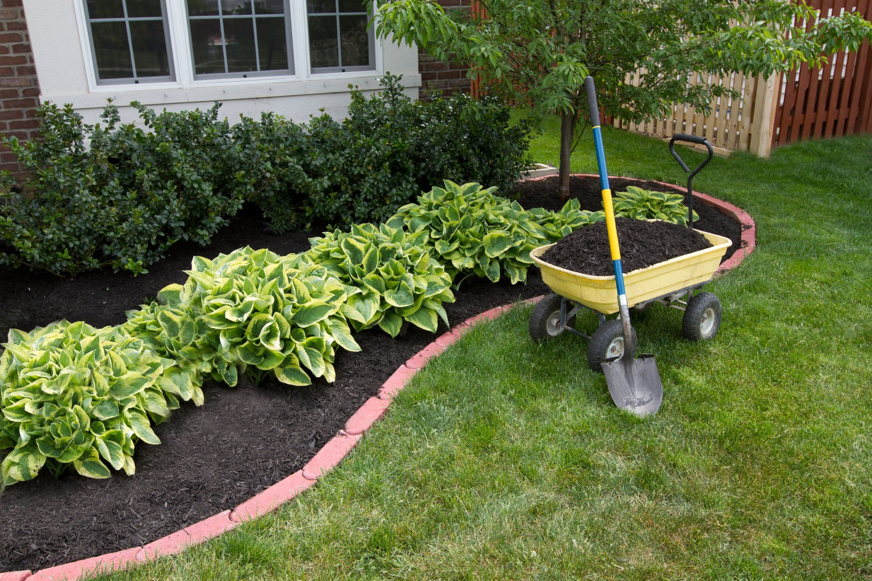 Garden with mulch layer.