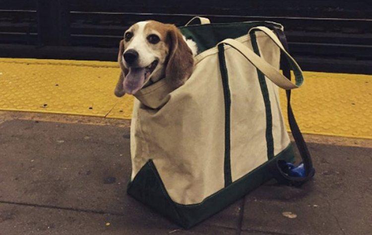 dog subway 3