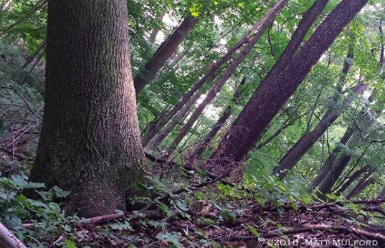 illusion trees