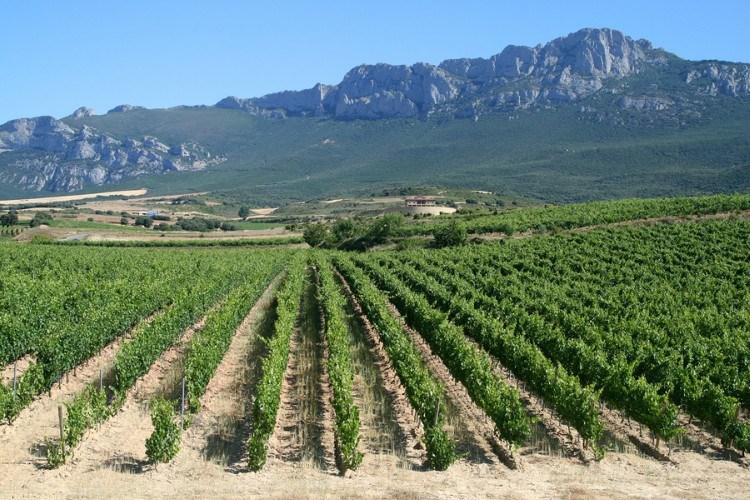 la-rioja-vineyard