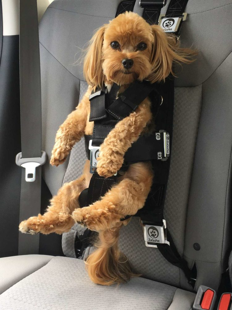 Image of dog wearing seatbelt