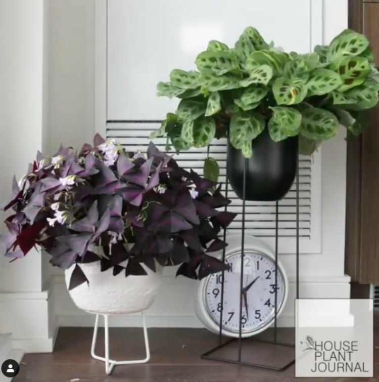 Image of plants in home in stands