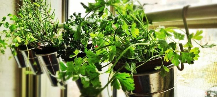 curtain rod herb garden