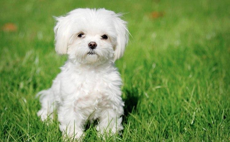 Image of dog.