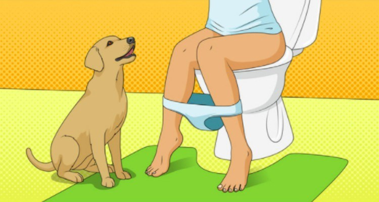dog watches owner on toilet