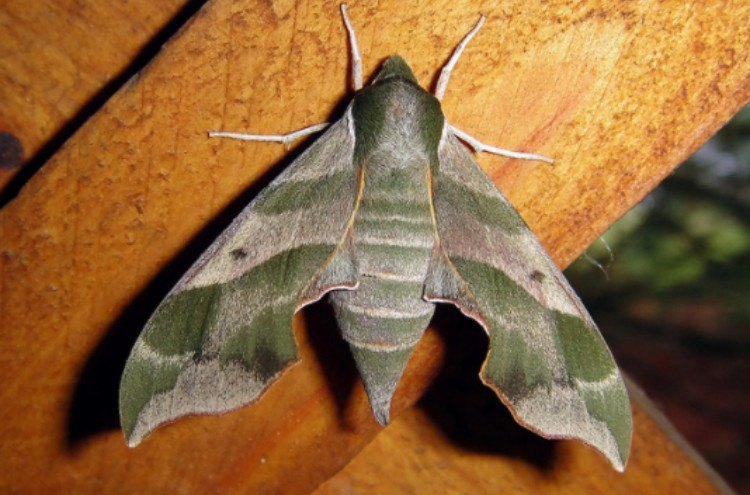 close-up of moth on wood