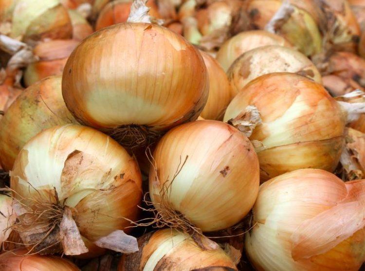 Bunch of sweet onions.