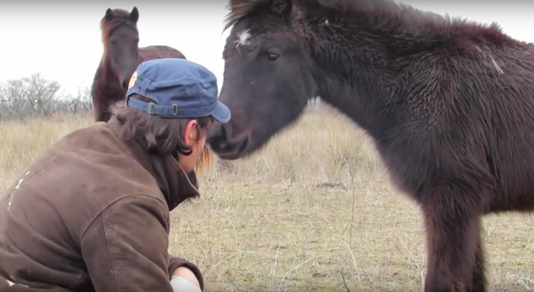 Image of horse touching noses with human