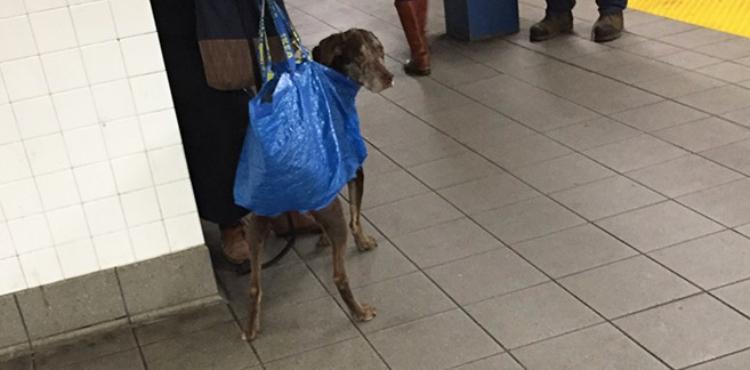dog subway 1