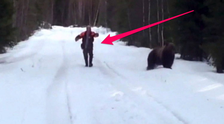 Swedish man bear attack