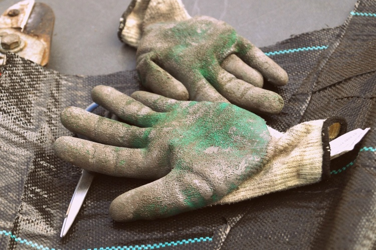 Use baby powder to make removing gardening gloves easier