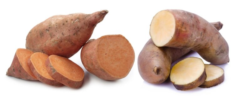 Yam versus a sweet potato