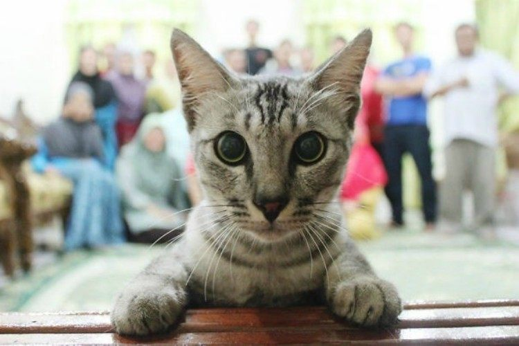 Cat in front of camera lens.
