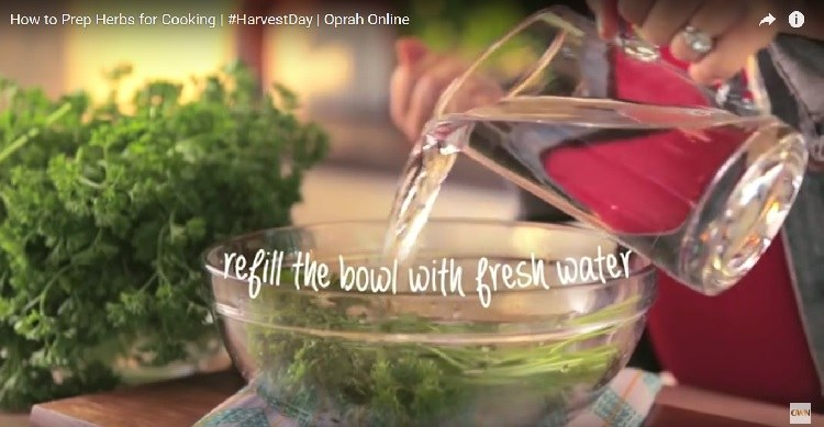 Adding fresh water to bowl of fresh herbs.