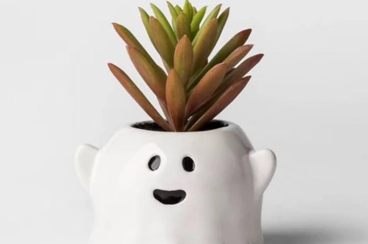 succulent ghost 1