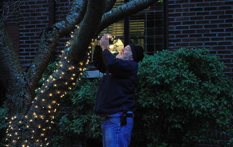 man hangs Christmas lights on trees