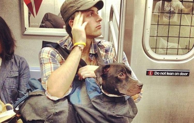 dog subway 12