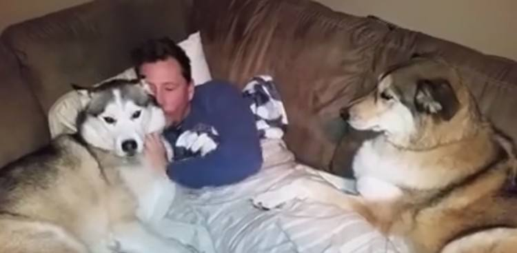 Owner giving Titan the husky some love.