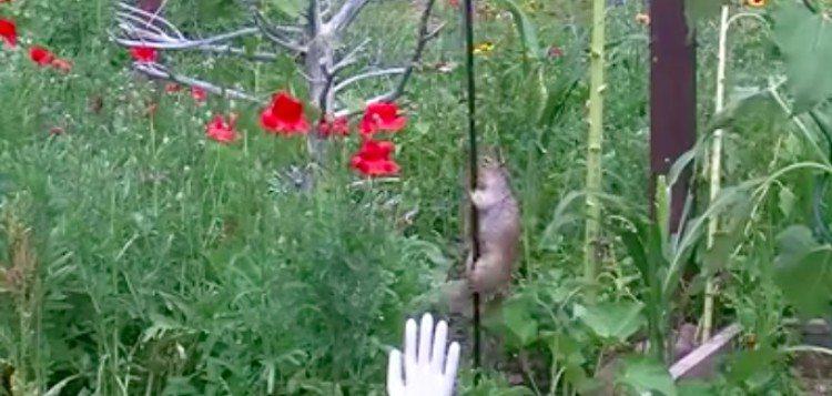squirrel sliding down pole in garden