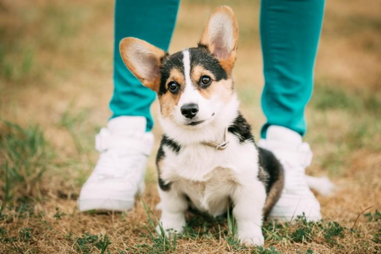 PuppySittingOnFoot