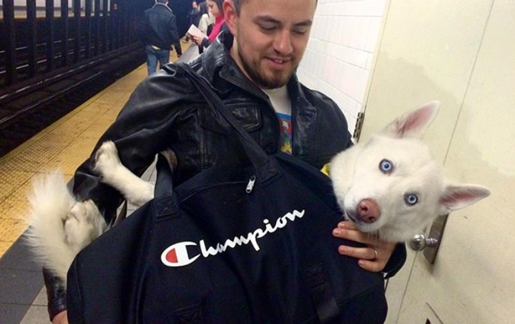 dog subway 6