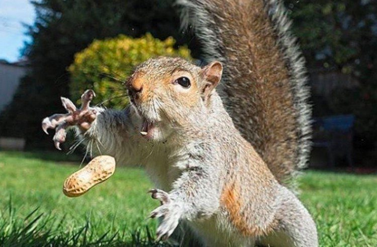 perfectly timed squirrel