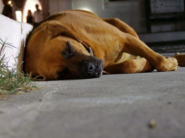 Dog sleeping on side.