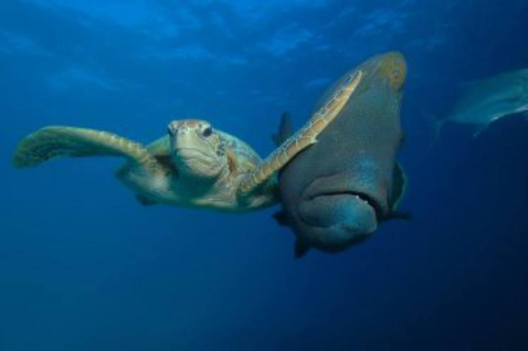 wildlife sea turtle