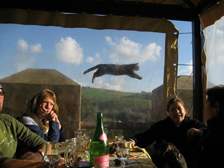 Cat flying through the air.