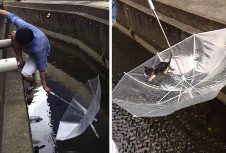 Image of man saving cat with umbrella