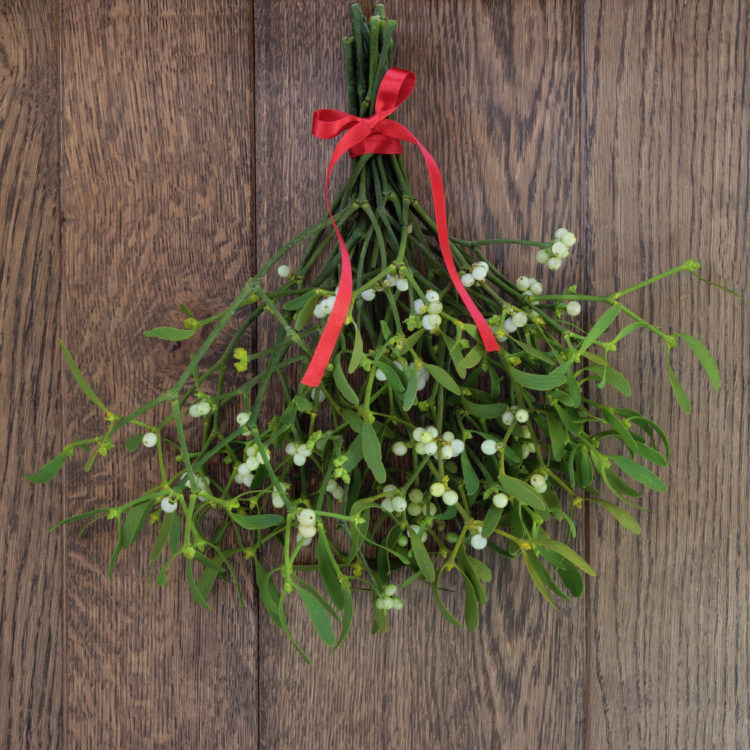 Image of Christmas mistletoe plant with berries tied in a bunch with a red bow over oak background.