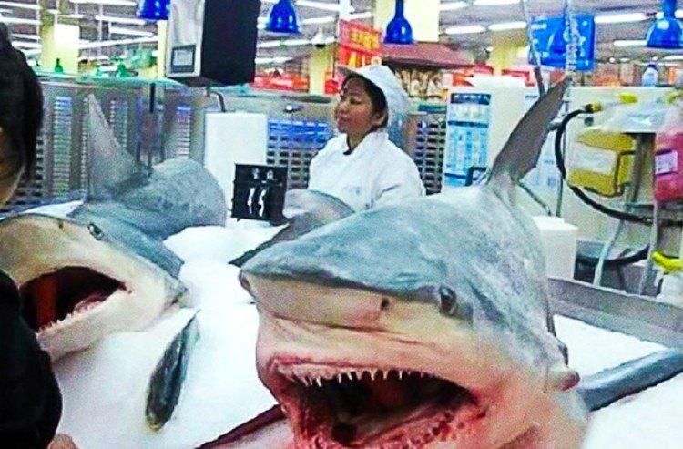 China shark