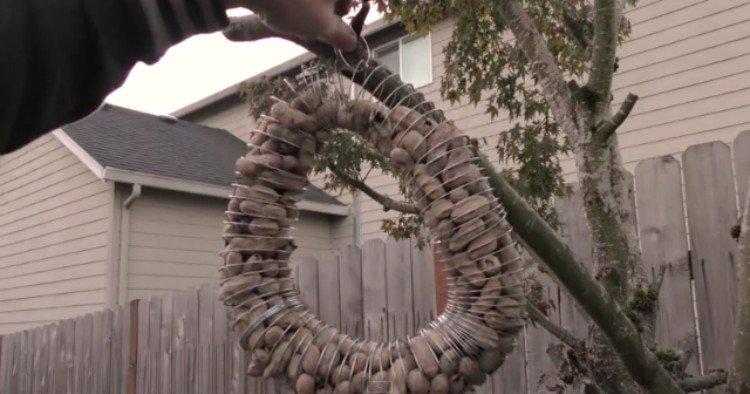 DIY bird feeder with a slinky.